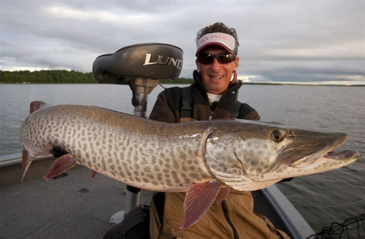 type of muskie fish
