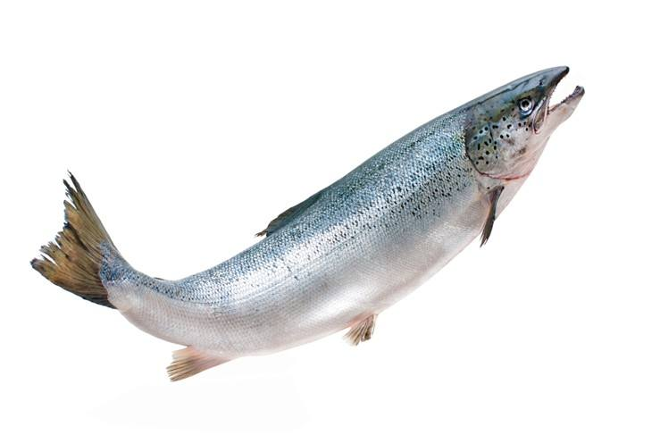 Salmon-Best Tasting Freshwater Fish