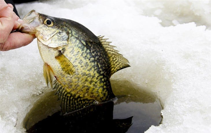 Conclusion - What Is The Best Time To Catch Crappie