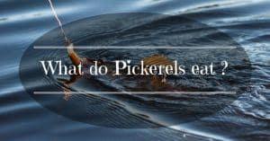 what-do-pickerels-eat