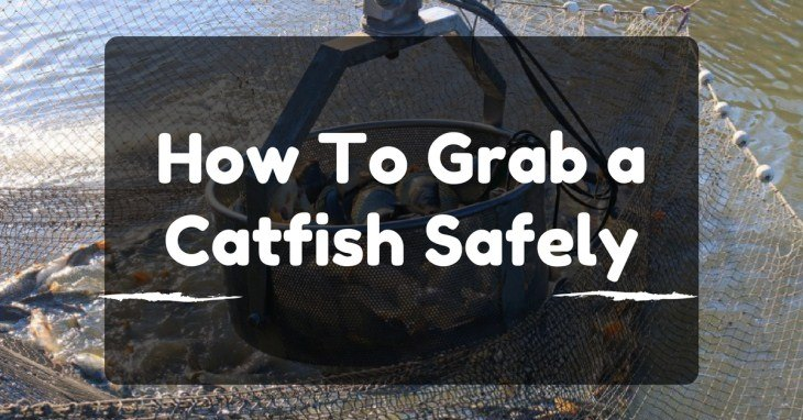 How To Grab a Catfish Safely