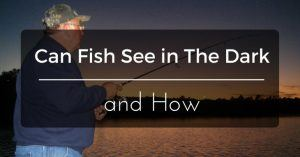 Can Fish See in The Dark