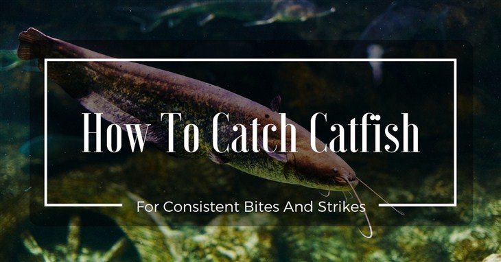 How To Catch Catfish