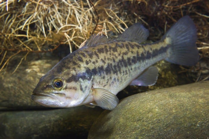 11 Best Tasting Freshwater Fish Bet You Never Knew 5 Is The Best