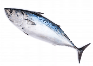 are bonito good to eat