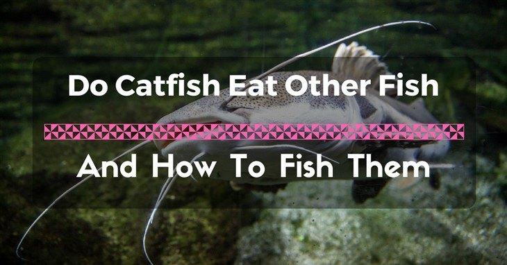 catfish eat other fish