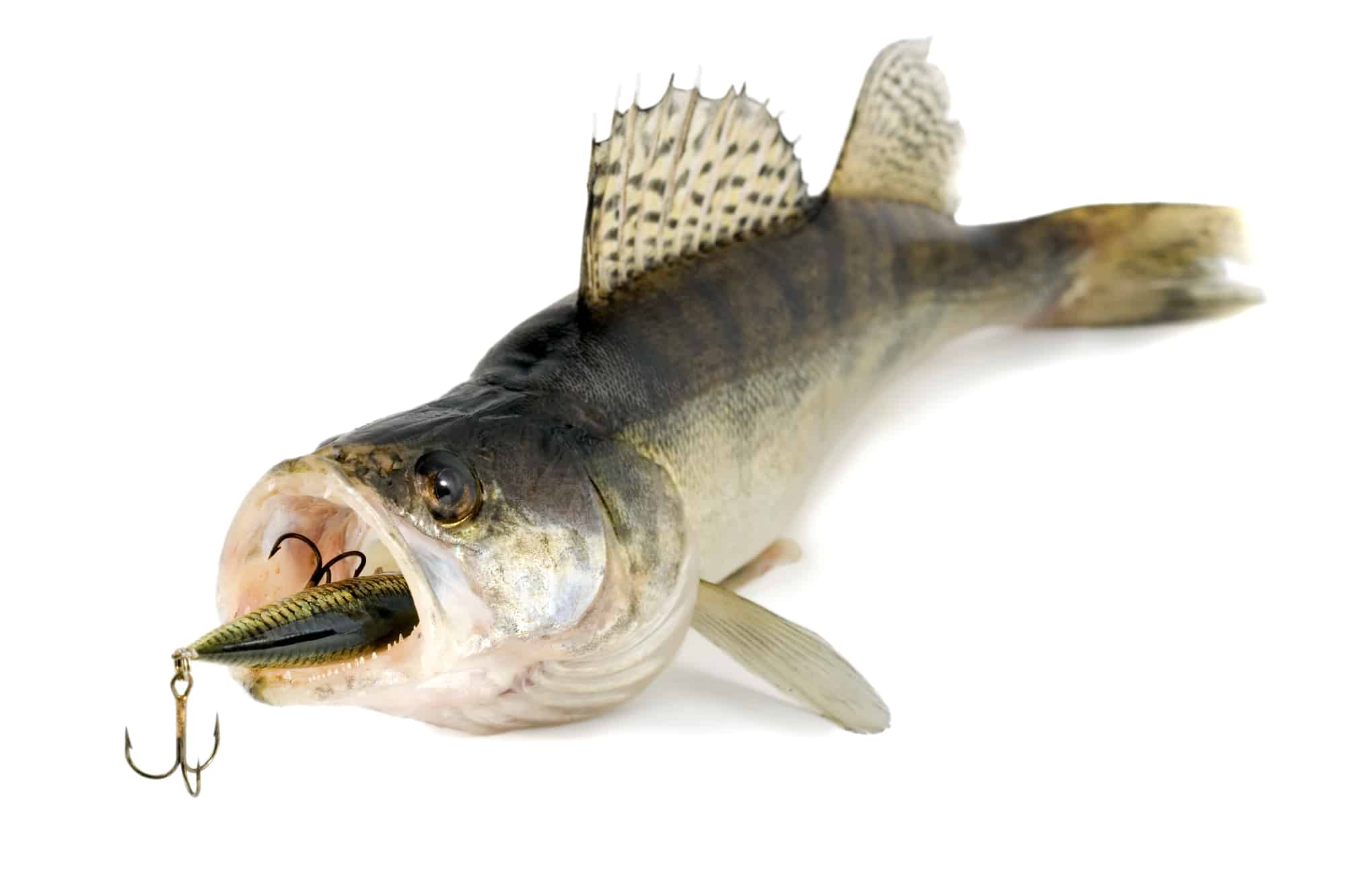 Best Walleye Lures and Jigs For Fishing - Buying Guide and