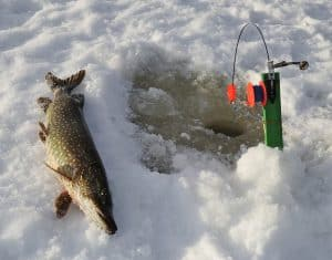 Ice Fishing Pike