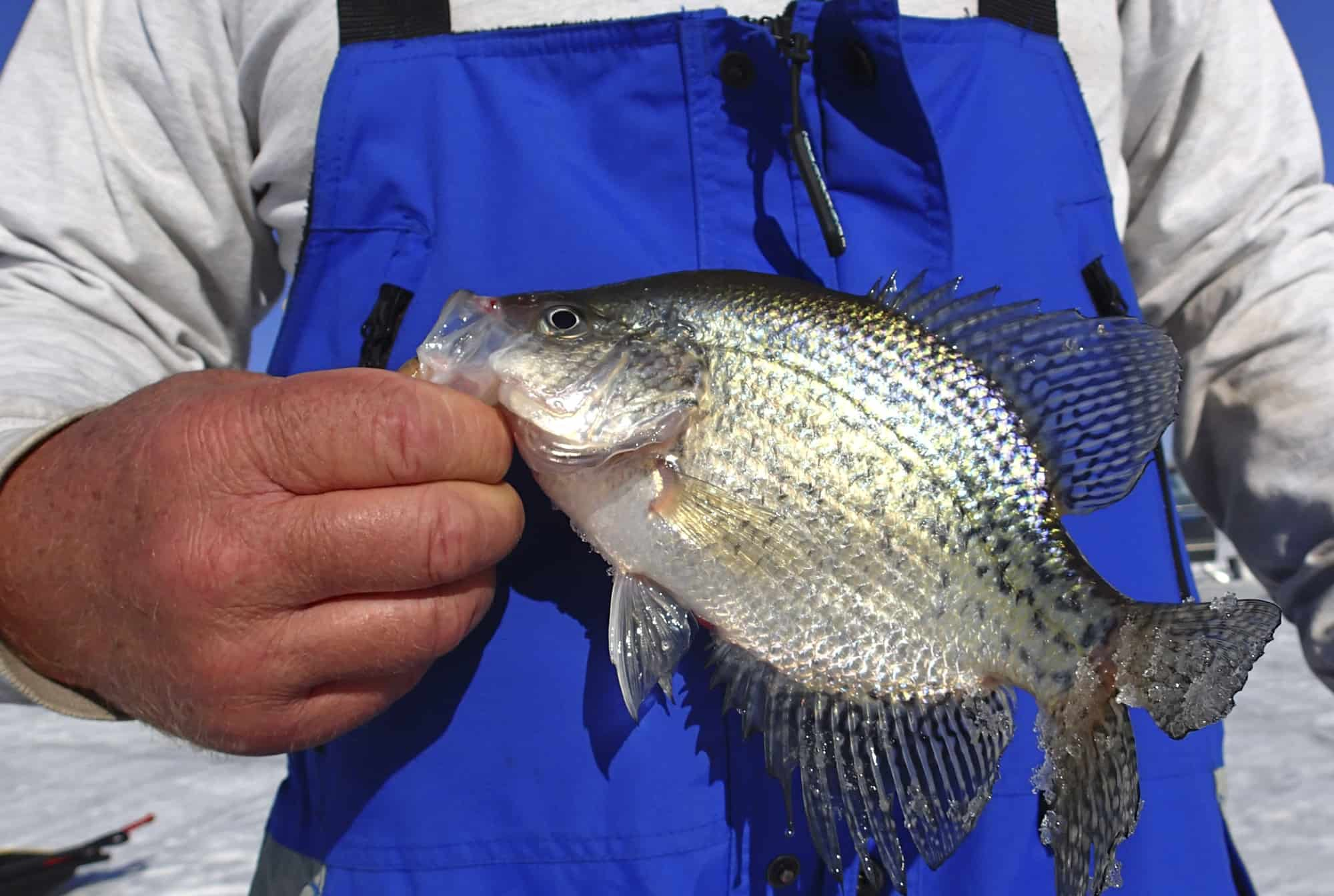 Catching Crappie In Cold Weather Our Best Winter Tips