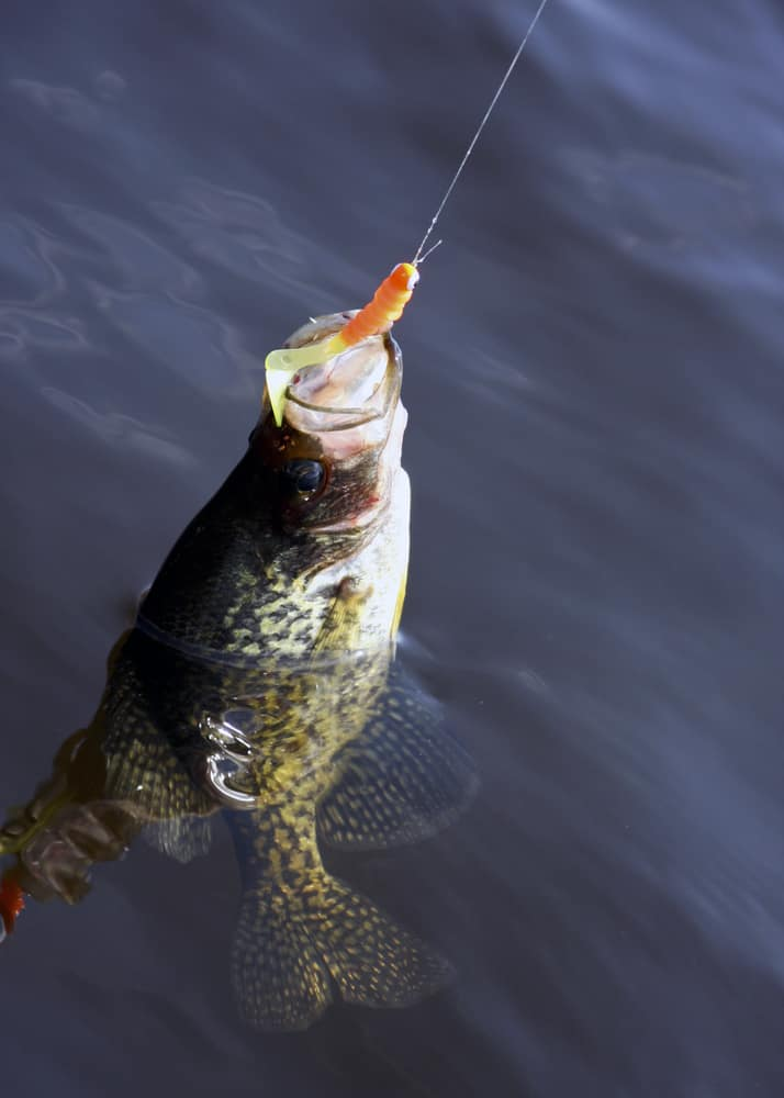 Best Crappie Lures, Jigs, And Bait