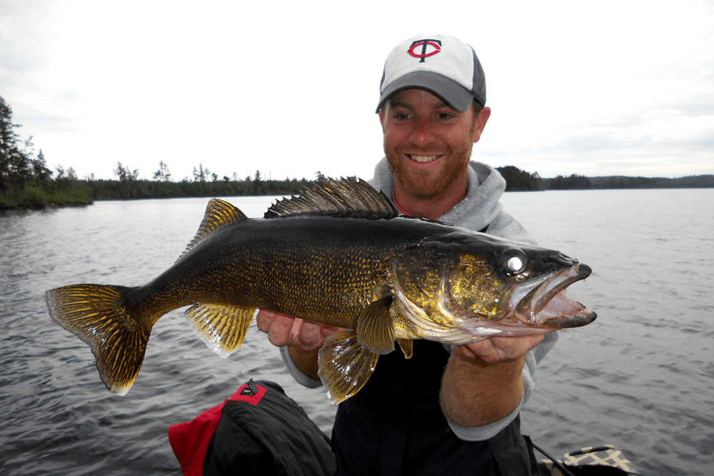 walleye basics