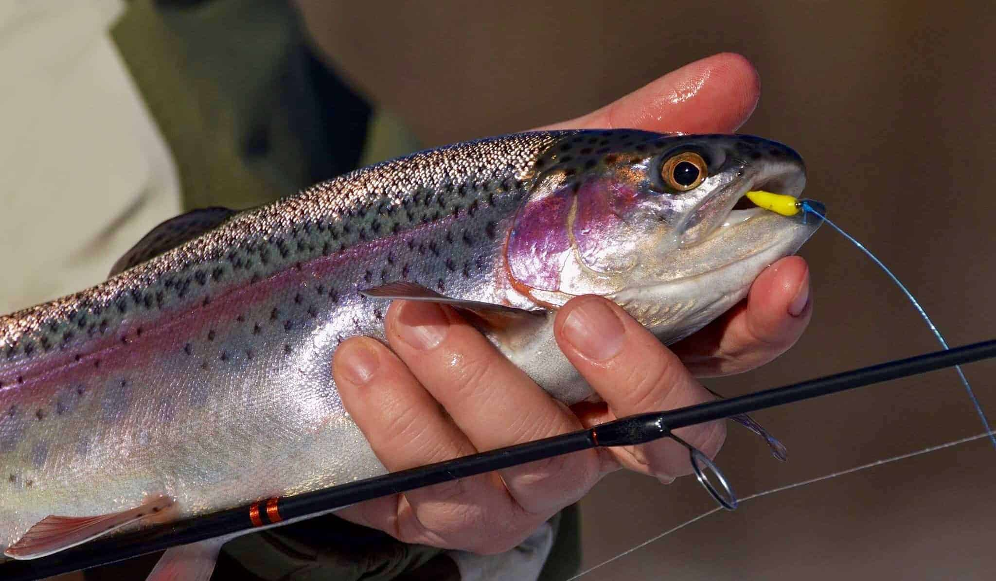 Best Trout Lures And Baits 2019 Buying Guide And Reviews
