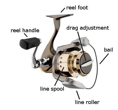 spinning reel anatomy