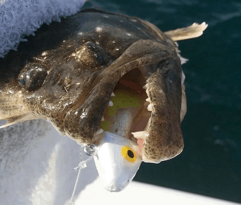 flounder fishing tips