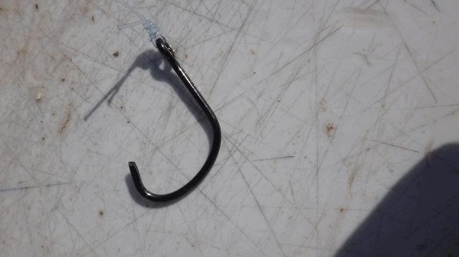 broken catfish hook