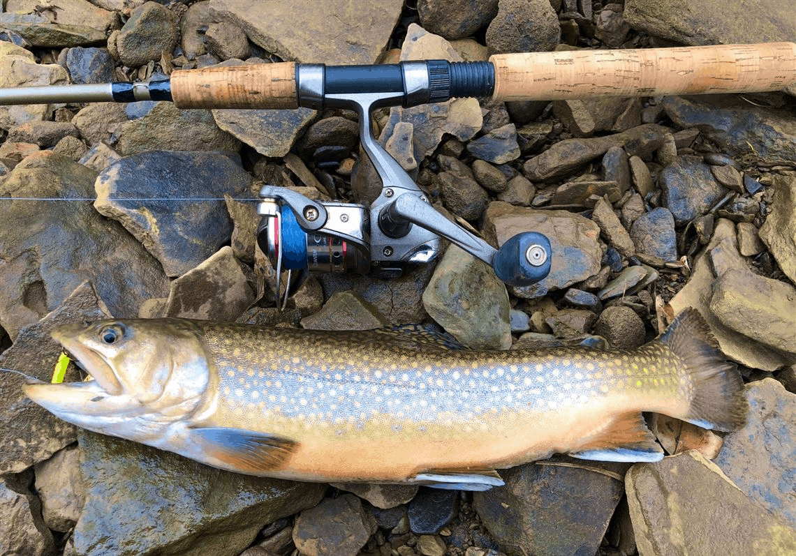 catching trout using spinning tackle